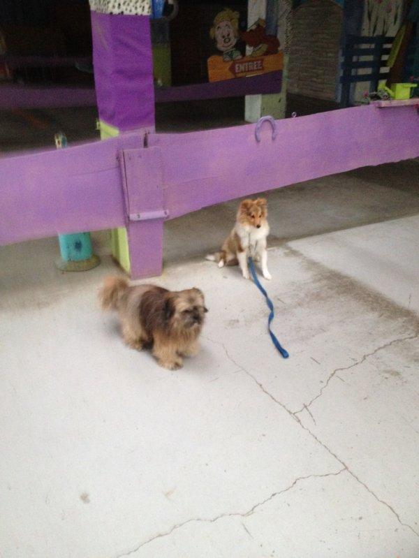 Nous apprenons à vos chiens à bien se comporter au quotidien