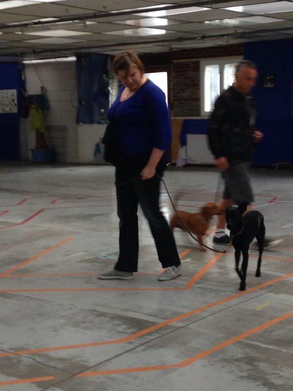 Apprendre aux chiens à se comporter correctement en laisse