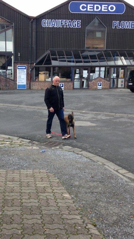 Nous apprenons à vos chiens a obéir sans laisse