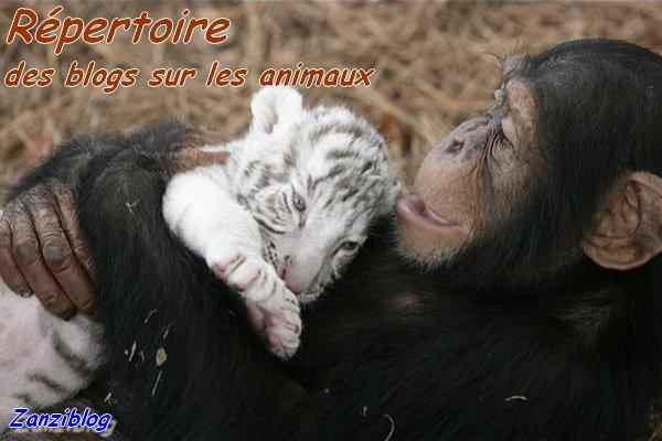 Répertoire des blogs sur les animaux