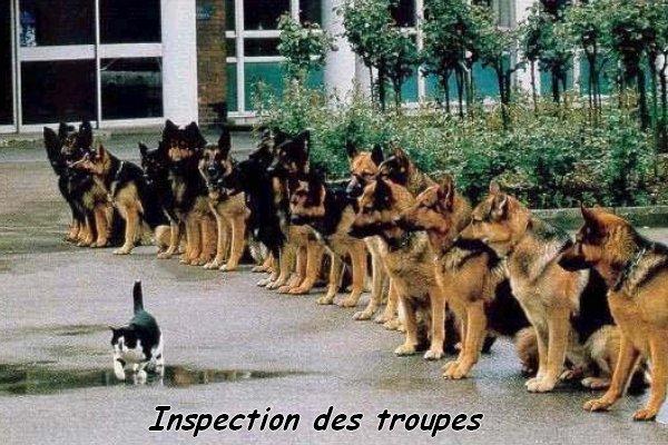 Inspection des troupes