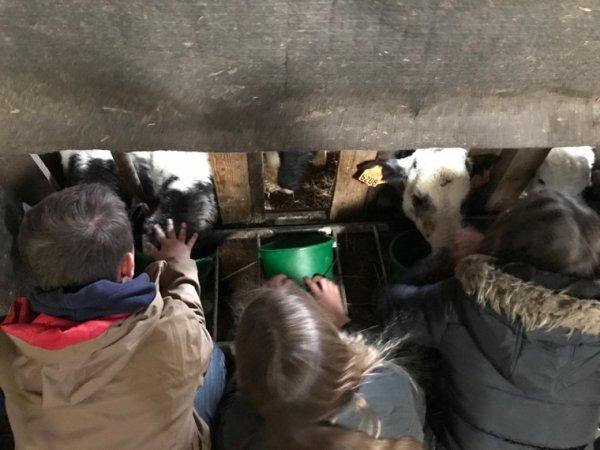 Nourrir les veaux, découverte des paillettes de reproduction et traite d'une vache ... dernière matinée de découverte !