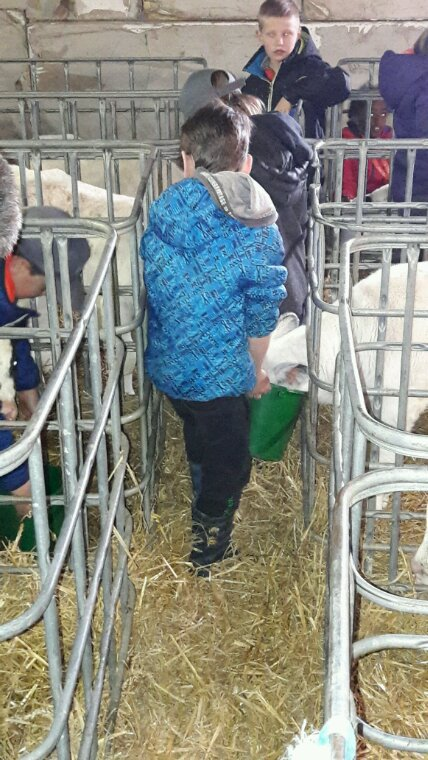On va nourrir puis traire les vaches !