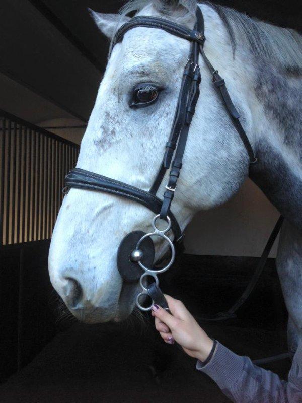 Pegasus mon cheval depuis que j'ai 8 ans <3
