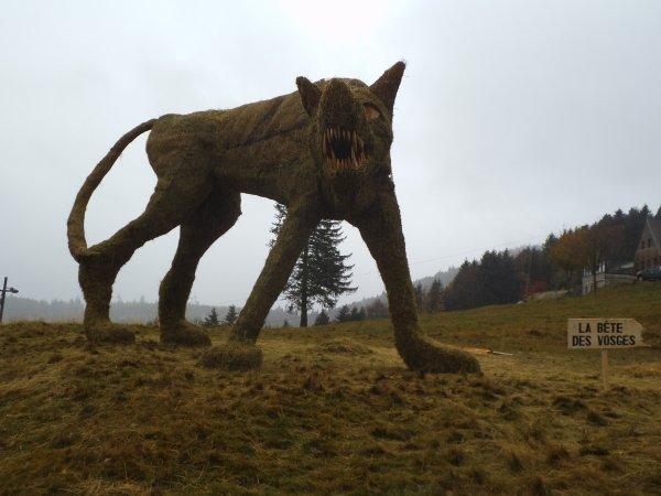 Images du Haut-Rhin : « La Bête des Vosges » est de retour sur les hauteurs de Muhlbach-sur-Munster, au sommet du Gaschney !...