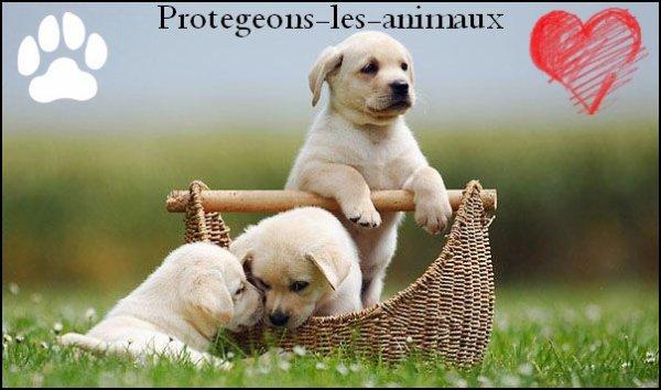 Populaire Blog de protegeons-les-animaux - Page 5 - Protégeons les animaux  BF17