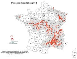 Animaux de nos forêts _ le Castor