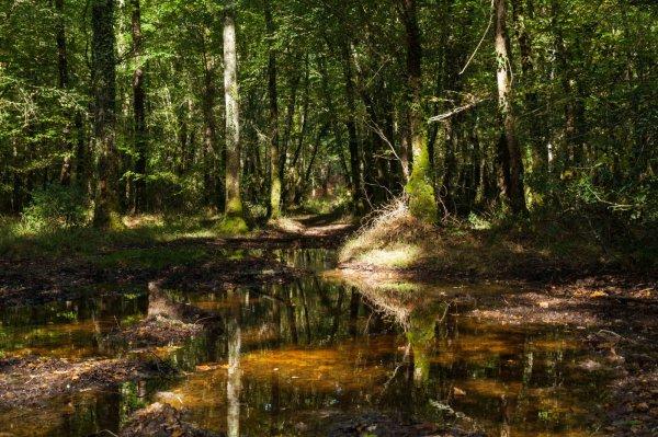 Idées promenades, la Forêt du Gâvre  ( Loire Atlantique)