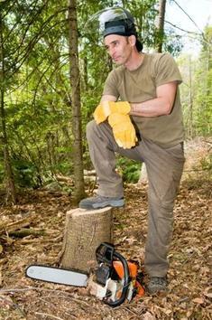 Bois-forêt : quels métiers, quelles études ?