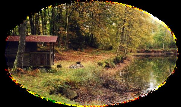 La récréation en forêt
