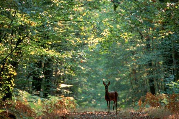 La forêt dans le monde