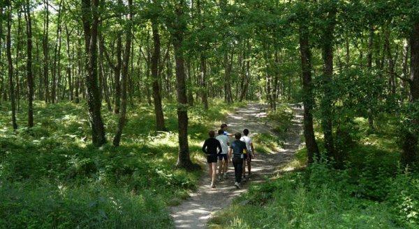 Idées promenades _ _ Forêt de Buzet