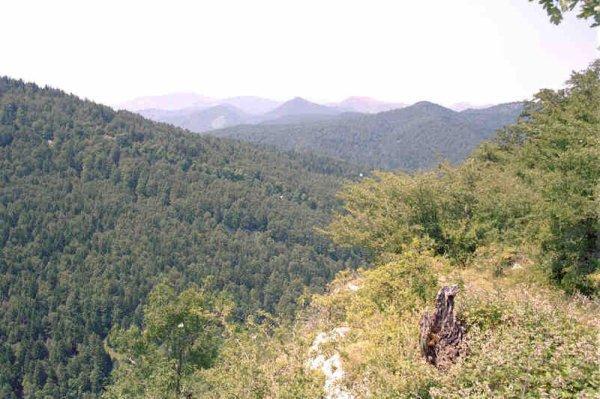 Les Grandes Forêts Française _ _ Forêt d'Iraty