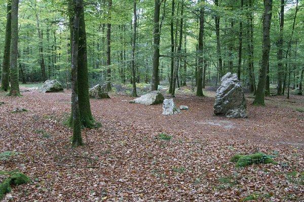 Idées promenades _ _ Forêt de Fougères