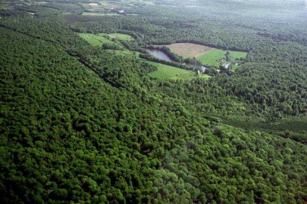 les Forêts en Picardie