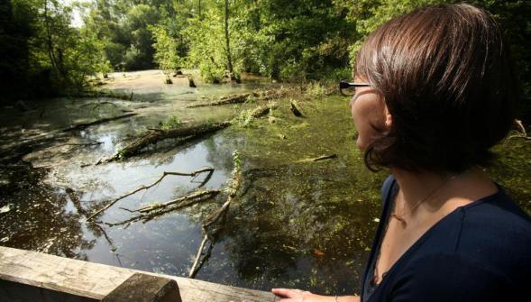 Parcs et forêts pour prendre l'air dans le Nord - Pas-de-Calais