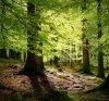 Forêt Charbonnière