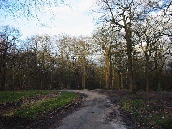 Forêt de Fausses-Reposes