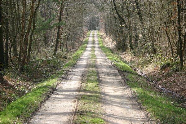 Forêt de Loudéac