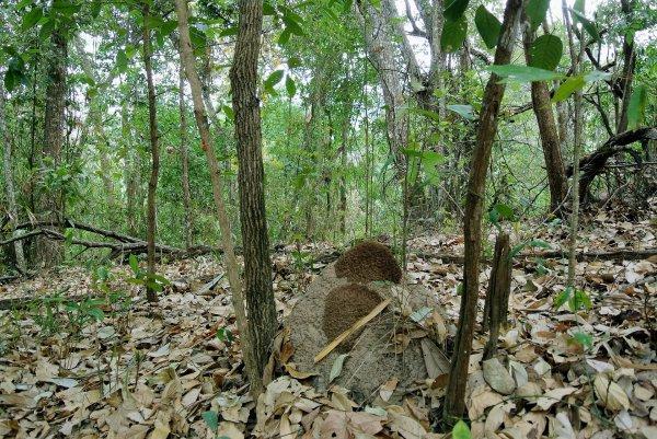 Forêts décidues sèches tropicales et subtropicales