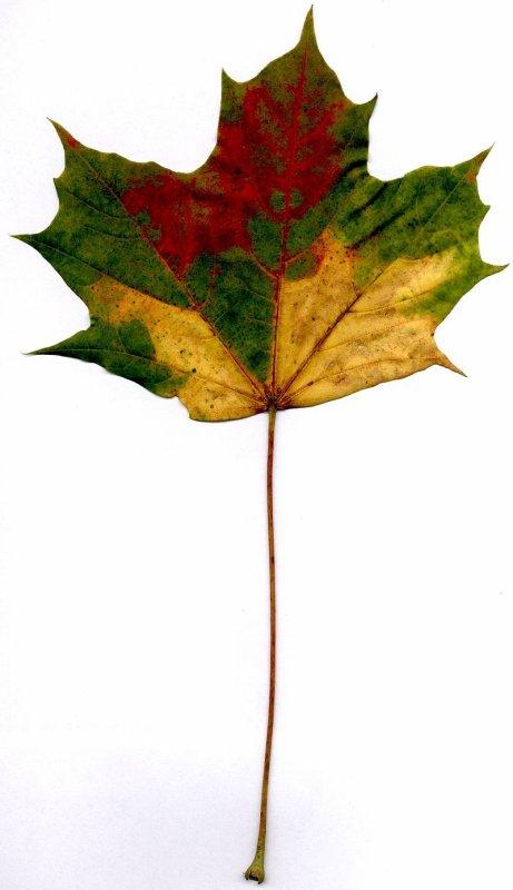 Changement de couleur des feuilles