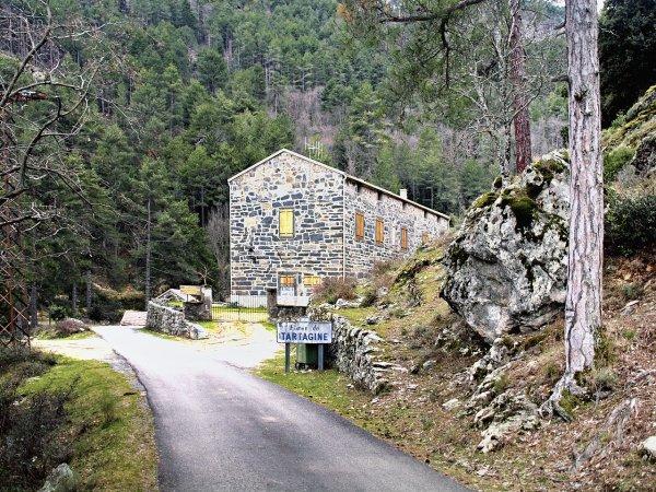 Forêt de Tartagine-Melaja