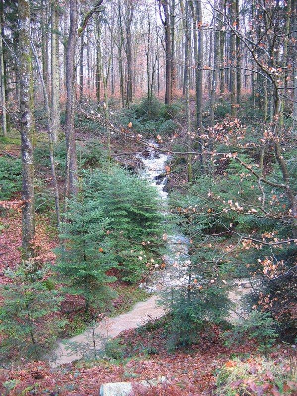 Forêt de Darney