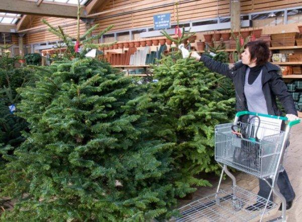 Acheter malin : choisir son sapin de Noël naturel