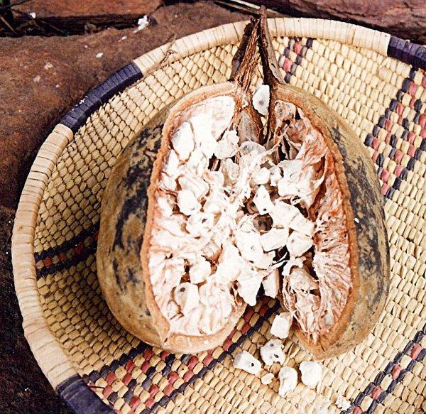 Baobab africain