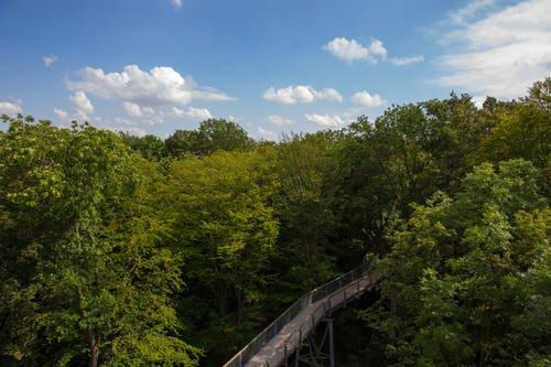 Forêts primaires de hêtres des Carpates et forêts anciennes de hêtres d'Allemagne