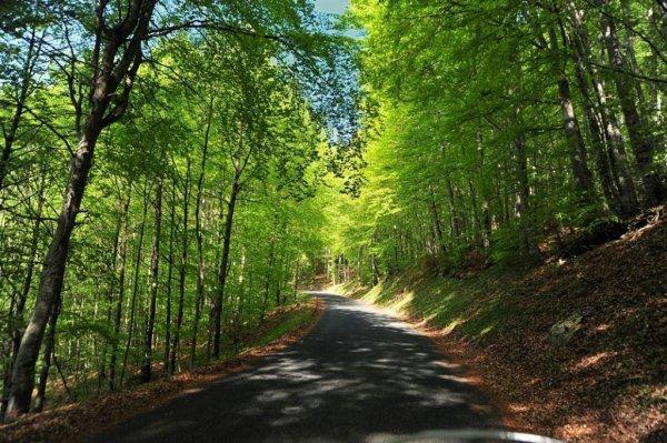 Idées promenades _ _ Forêt de Champfromier