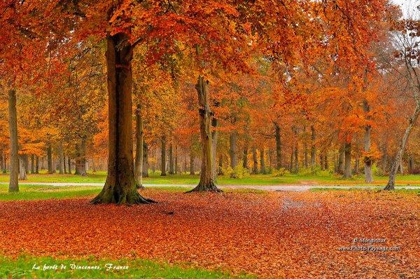 6 forêts splendides en automne qui vous transporteront dans un autre monde