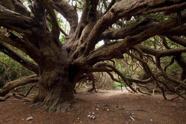 Six forêts où laisser vagabonder son imagination