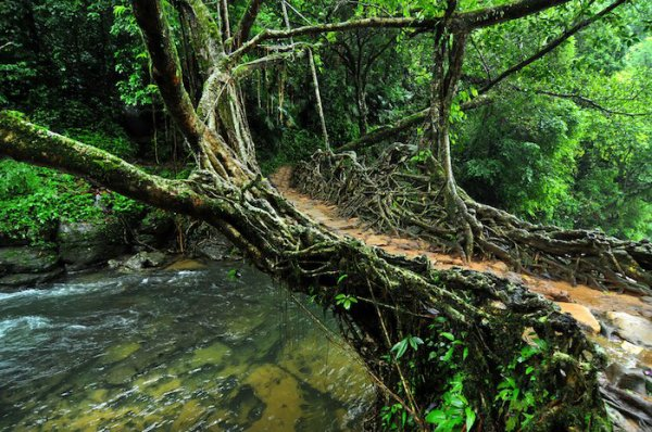 En Inde, les ponts vivants du Meghalaya sont fascinants