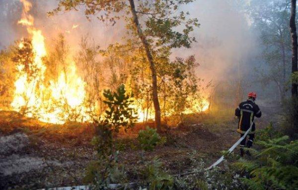 Comment éviter les incendies en forêt