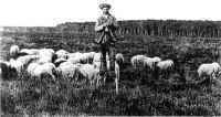 Histoire des échassiers landais