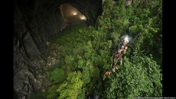 Forêts insolites qui semblent venir d'une autre planète