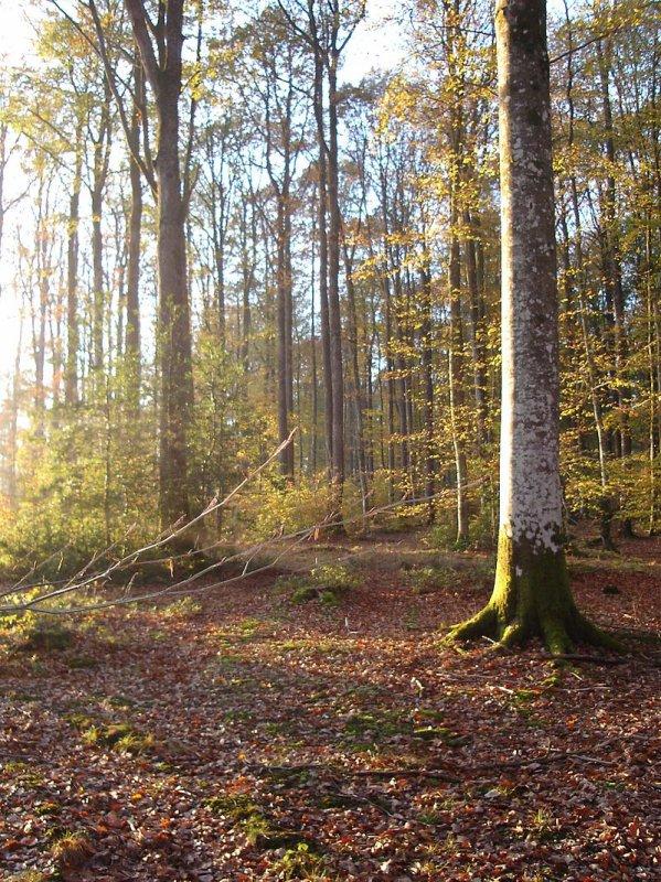 Forêt de Senonches