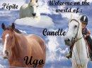 Photo de Pony--Dreammm--T