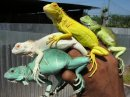 Photo de mes-reptile