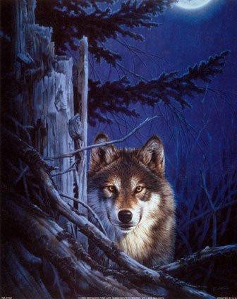 les loups je vous aime!!!!!!