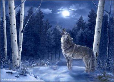 Le Loup ... une si bel bête....