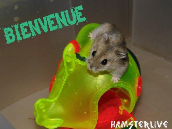 Bienvenue sur Hamsterlive