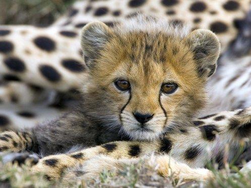 Connu la situation continue à se dégrader et la liste d'espèces en voie  NW44