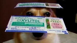 Jeu n°1 : Loterie Gagnante !