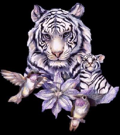 tigre blanc et oiseaux