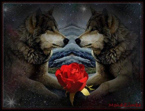 lou avec une rose