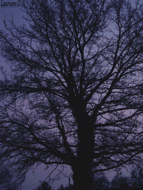 - L'hiver