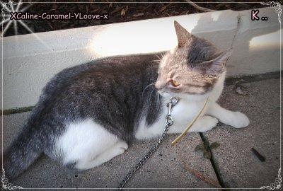 * Histoire de mon chat ♡