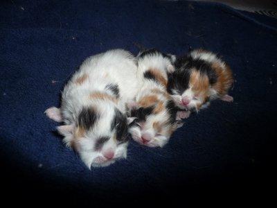 Gladys, Gess(y) et Galia  du bois de Rose à 3 jours.